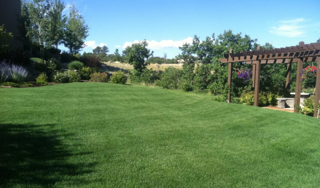 Gorgeous result of lawn seeding by J. Rick.