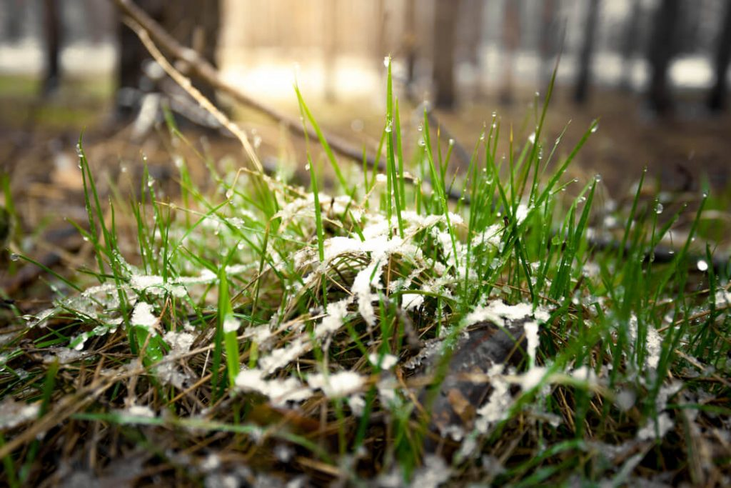 Guard Your Yard: Try These 3 Spring Lawn Care Tips