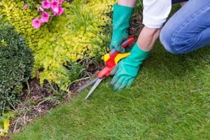 Guard Your Yard Try These 3 Spring Lawn Care Tips