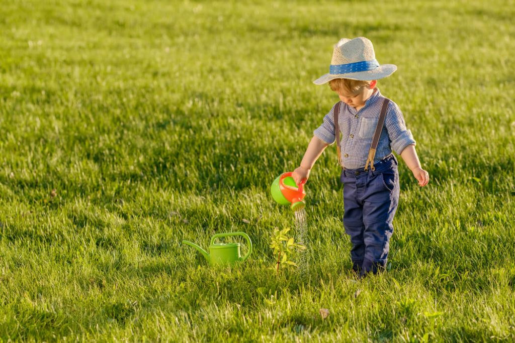 Why Seeding and Fertilizing Are Important Parts of Professional Lawn Care