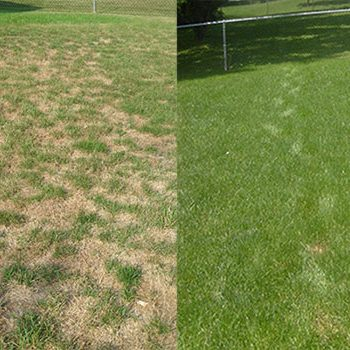 jrick-lawn-care-before-after-seeding