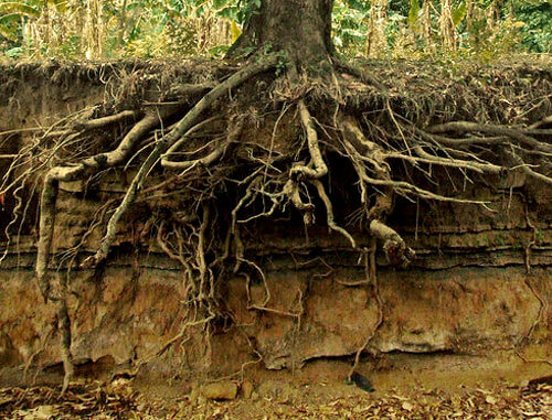 J . Rick offers deep root fertilization to keep your trees healthy.