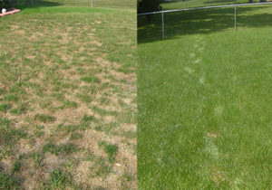 Before and after seeding services with J. Rick Lawn & Tree.